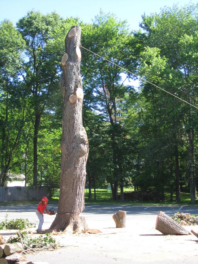 blk-parking-lot-tree-11.jpg