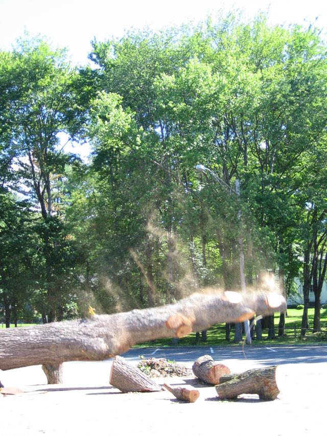 blk-parking-lot-tree-falling.jpg
