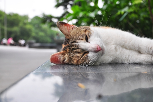 Here's a sleepy cat I photographed while I was in Taiwan (many years ago).