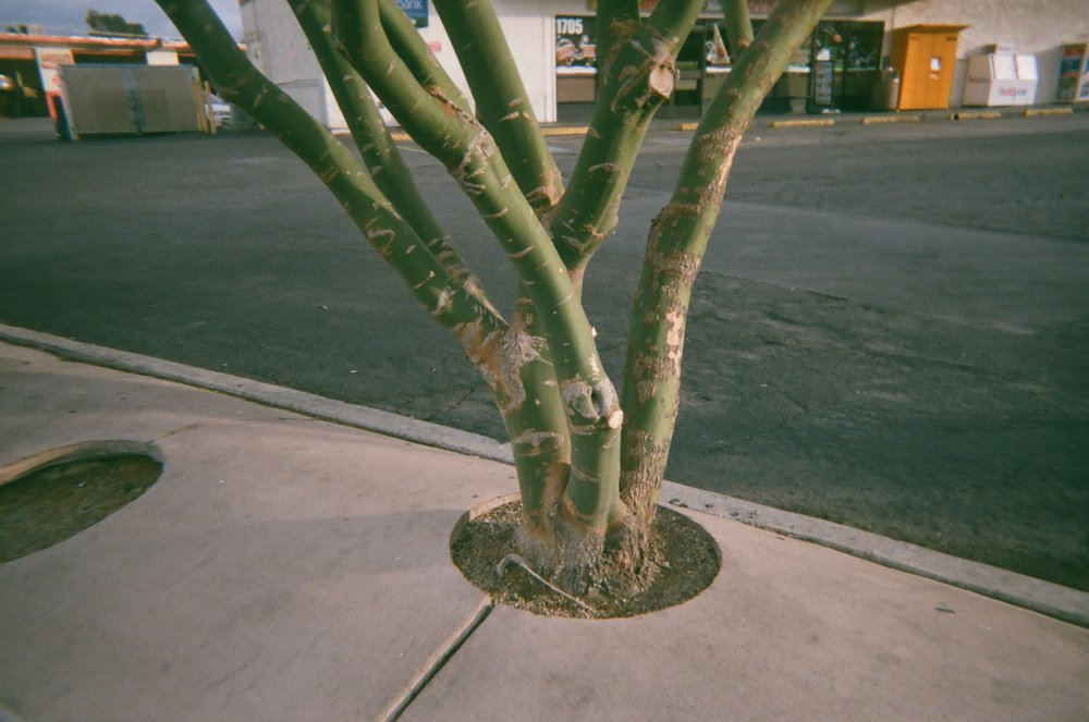Tree in Las Vegas by Sophia N. Ahmad