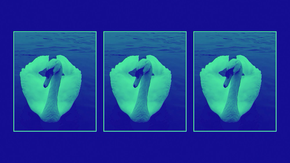 Ducks_screenshot_2.jpg