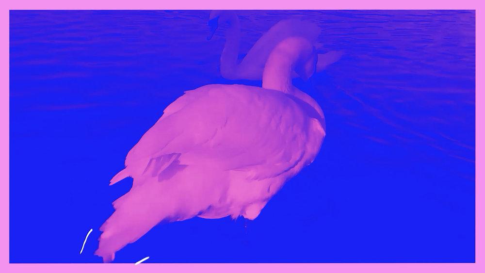 Ducks_screenshot_3.jpg