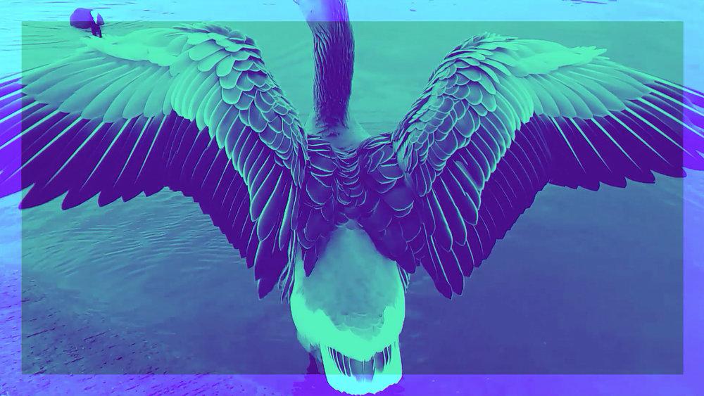 Ducks_screenshot_7.jpg