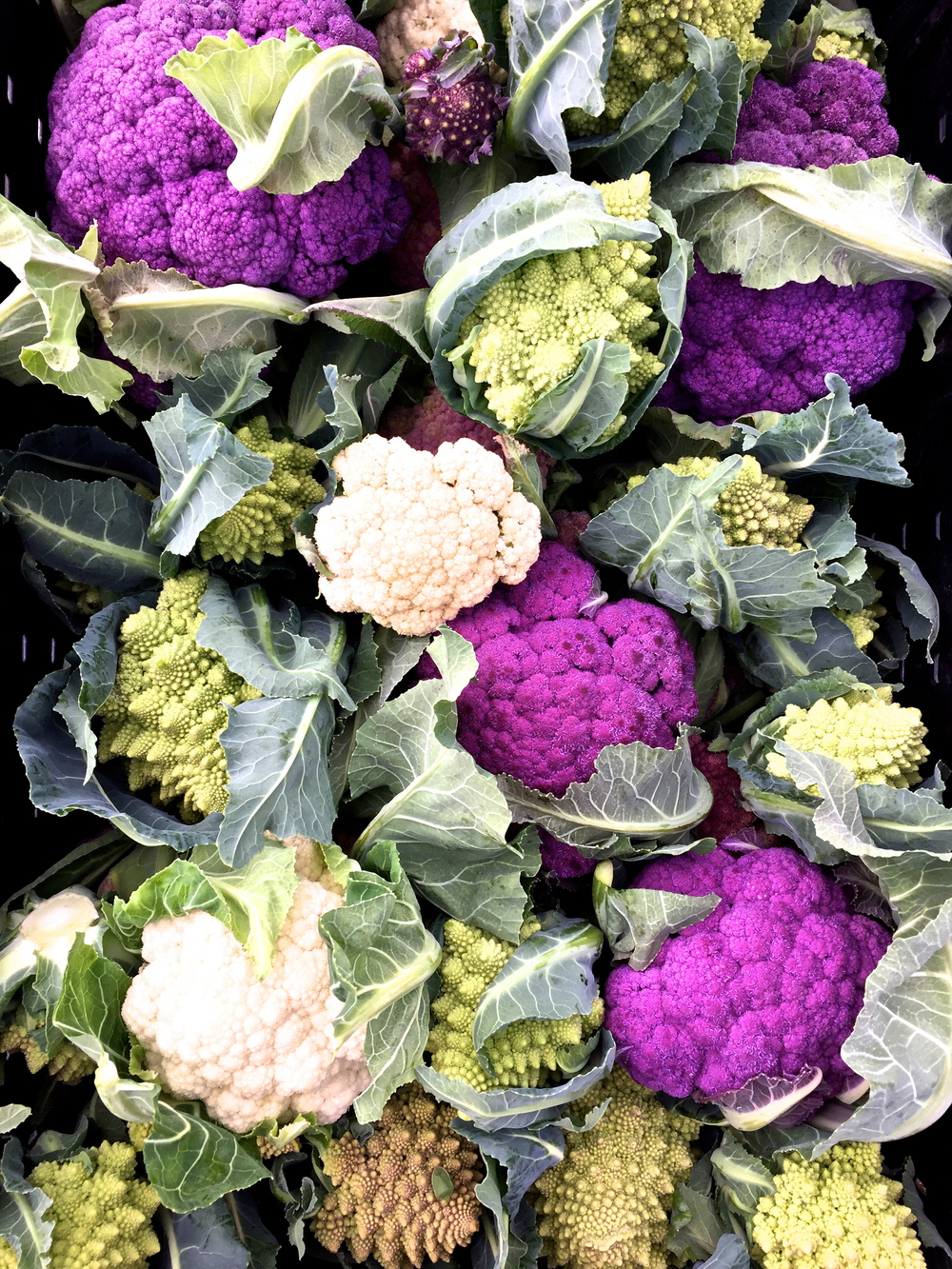 an array of cauliflowers and romanescos harvested for our CSA / farmer's market sales last tuesday