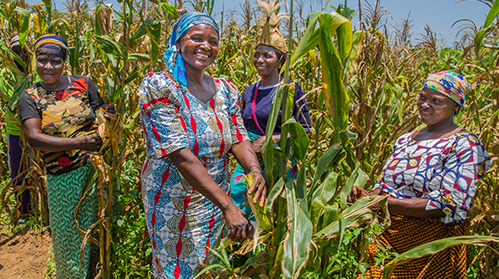 Women for Women International_Monelikan_Demonstration Farm_499 x 279 .jpg