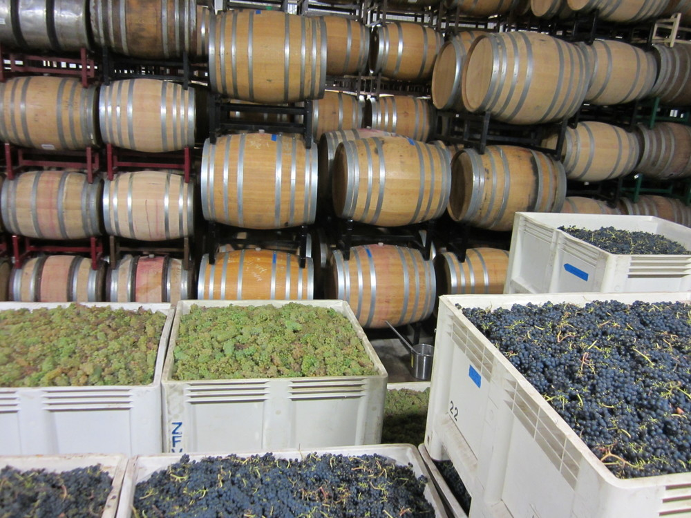 Viognier and Syrah, 2015 Harvest