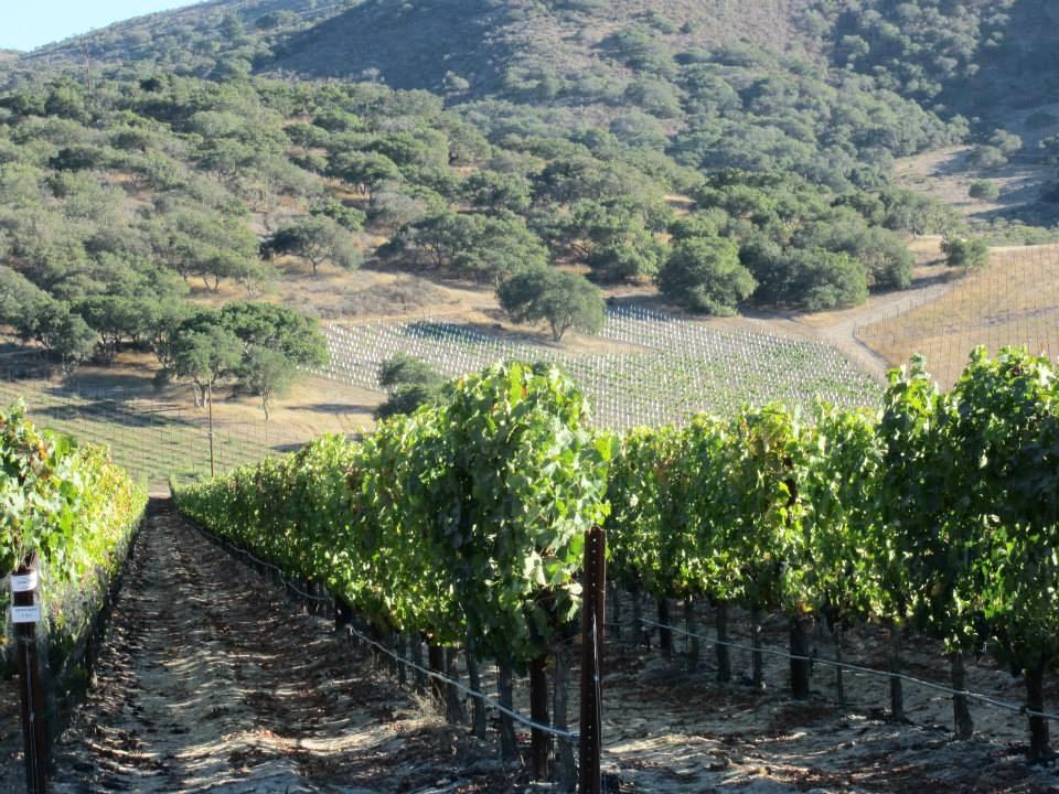zotovich vineyard.jpg