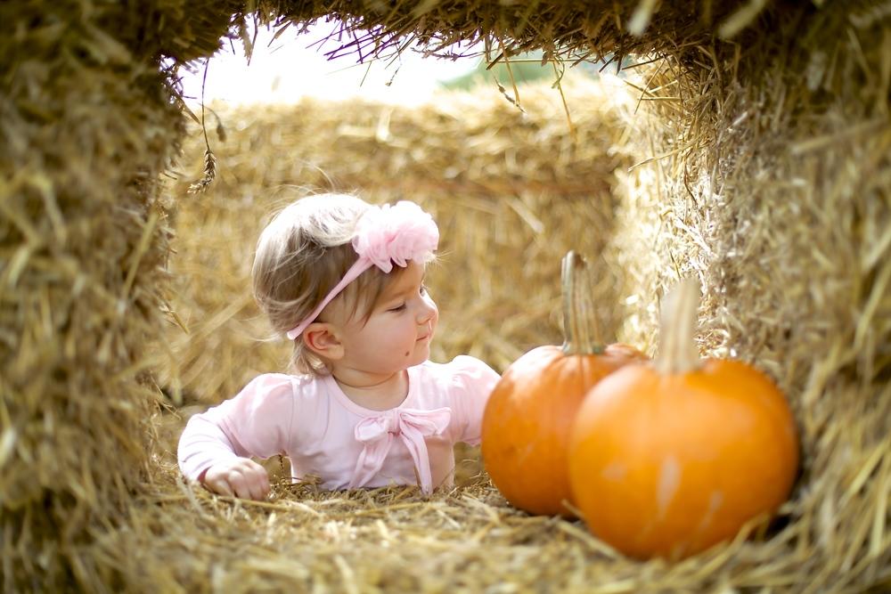 pumpkin patch 13