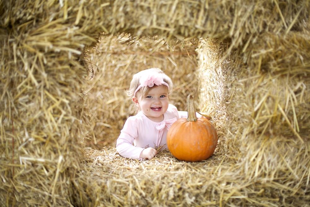pumpkin patch 14