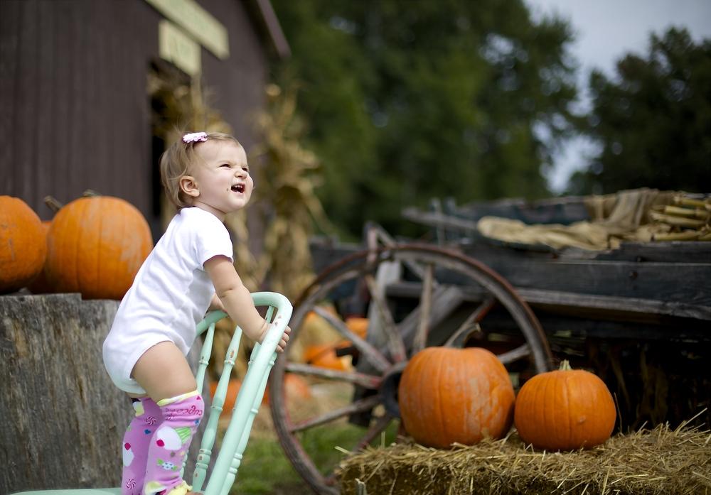 pumpkin patch 23