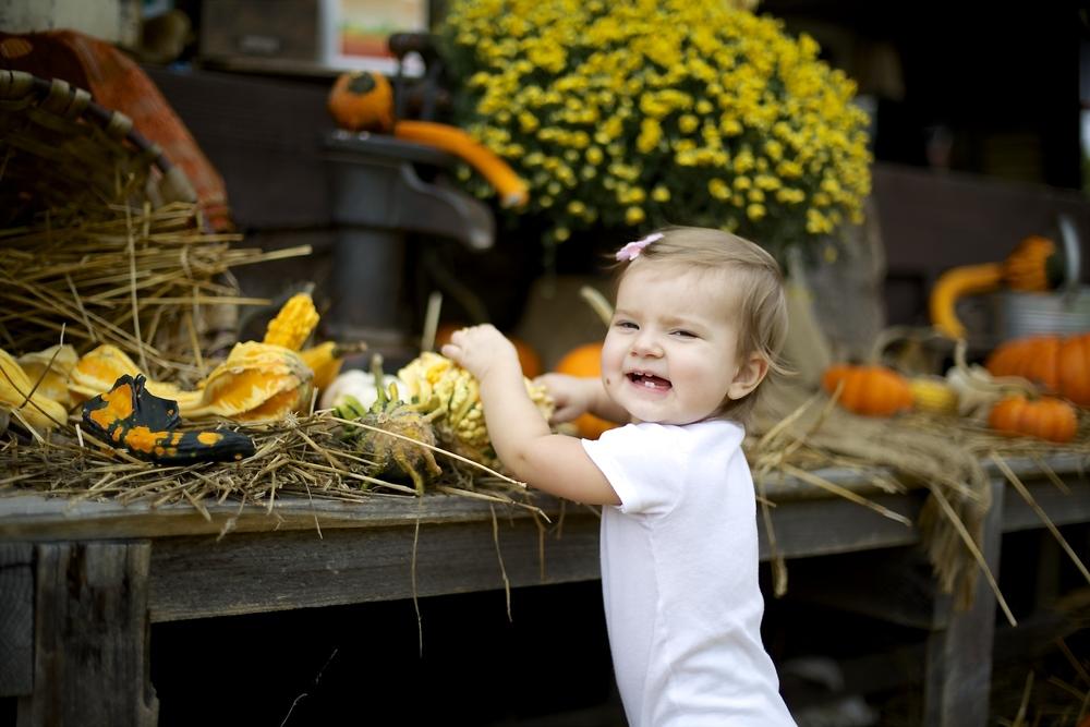 pumpkin patch 24