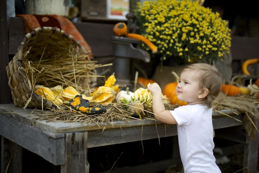 pumpkin patch 25