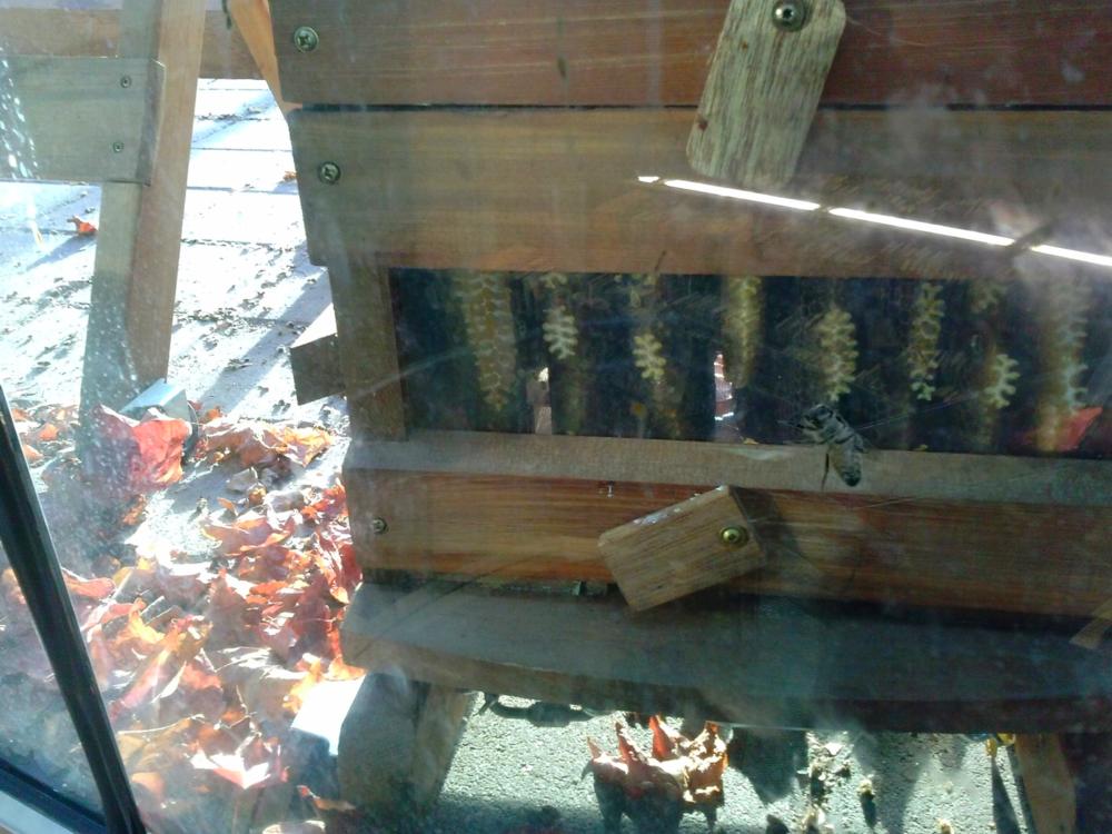 honeybeesharvest