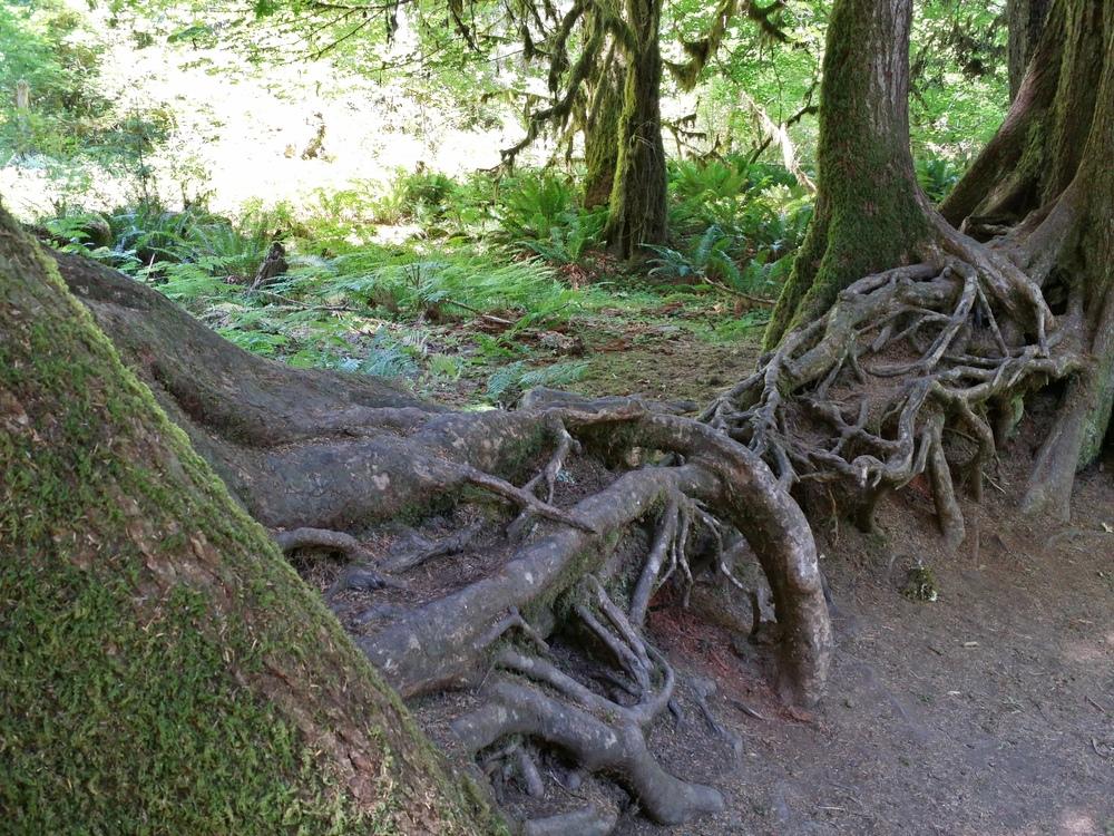 nurselogathohrainforest
