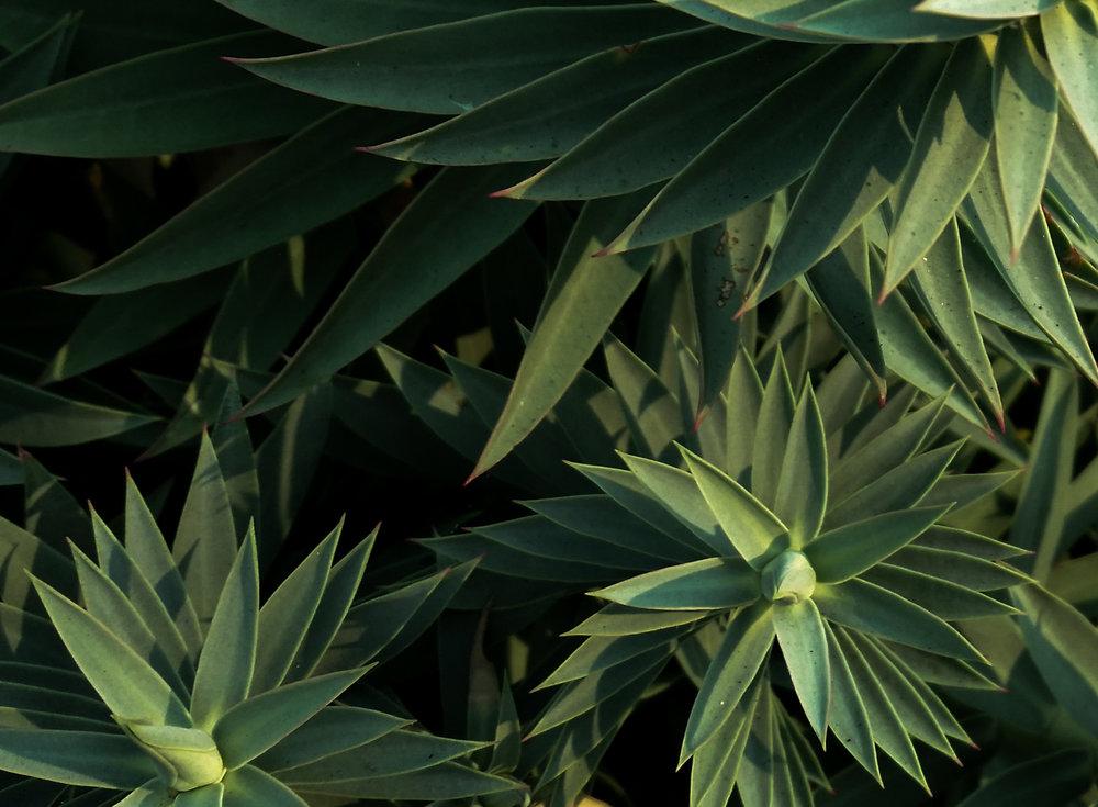 plantGreenspiralM.jpg