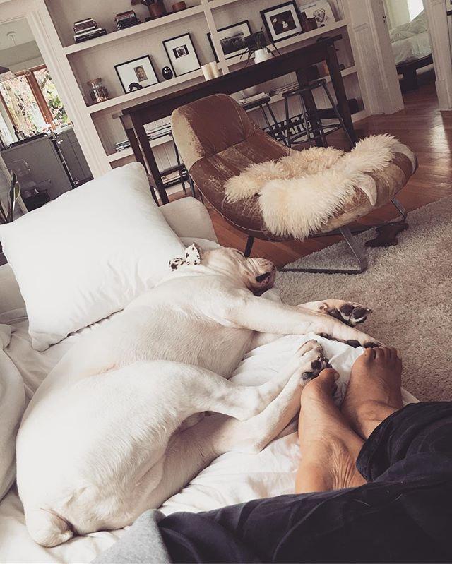 Relaxing with my bestie. 🐶❤️#housedogge #wubbi #easylikeasundaymorning