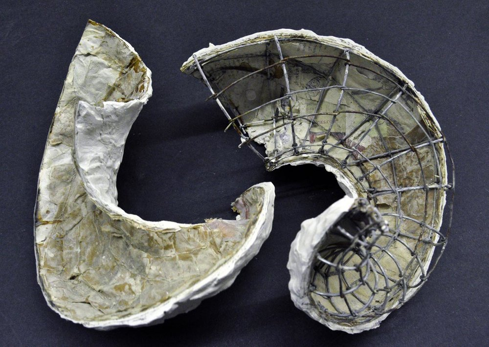 paulapart.shell.shelling.dissect.dissection.sculpture.plaster.steel.wire.paper(6).jpg