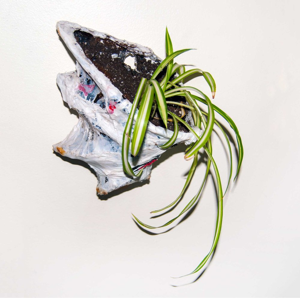 PAULAPART.EcoAge.EmmalinePayette.plant.shell.planter-(6).jpg