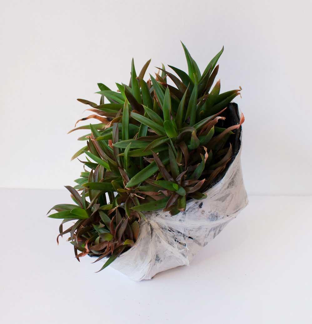 PAULAPART.EcoAge.EmmalinePayette.plant.shell.planter-(5).jpg