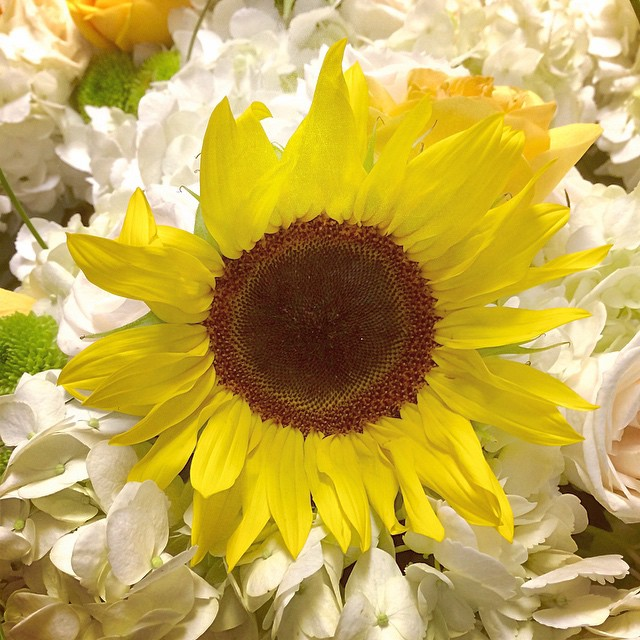some sunshine at TEFI & FBF studios tonight #theeventfirminternational #floralsbyfe #sunflowers #happiness