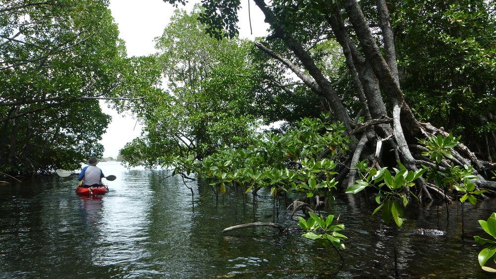 Tiger Blue Kayaking.JPG