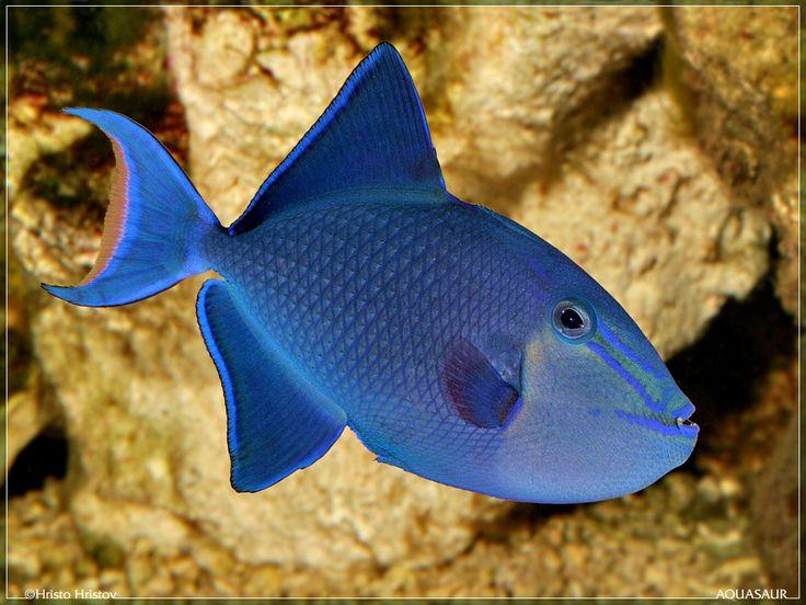 Banda's underwater beauty.
