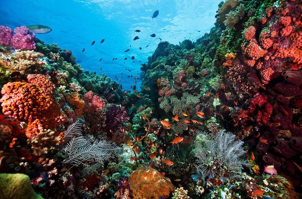Beautiful Corals. Image : Martin Klein