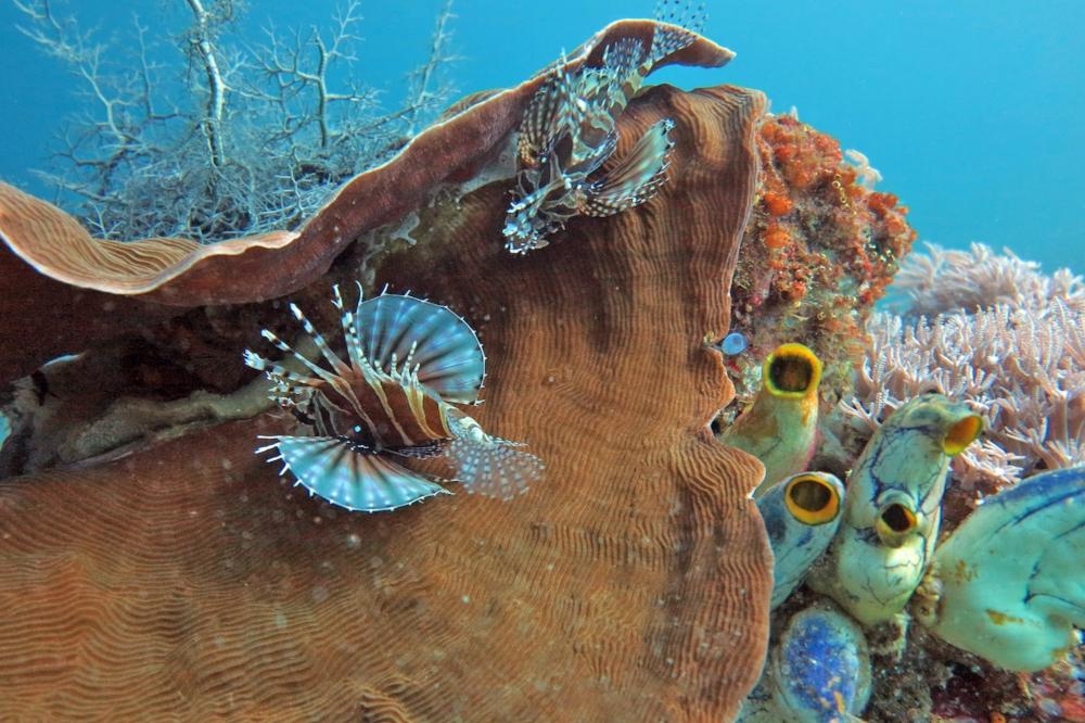 raja ampat underwater activity when on raja ampat liveaboard