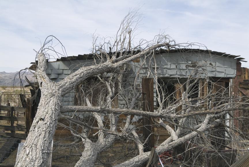 tree_house.jpg