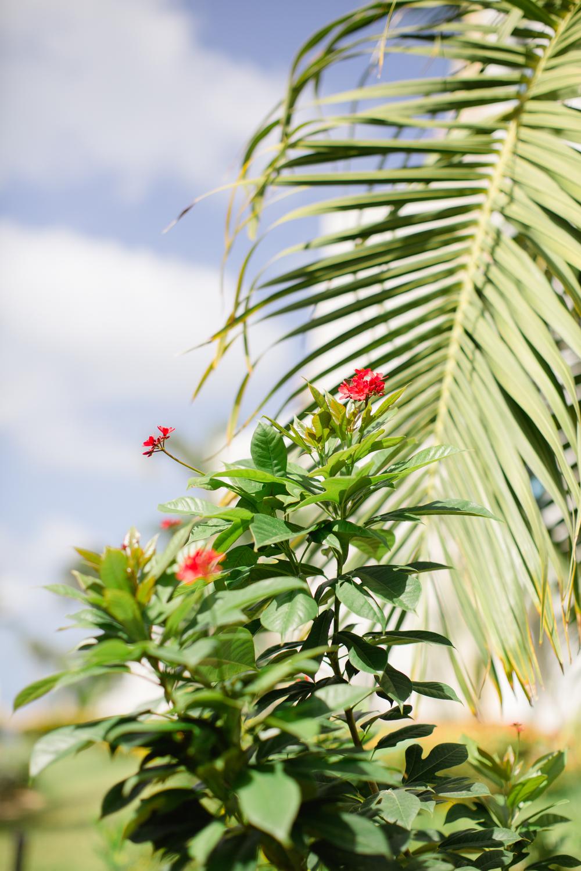 Aruba_JDP-9402.jpg