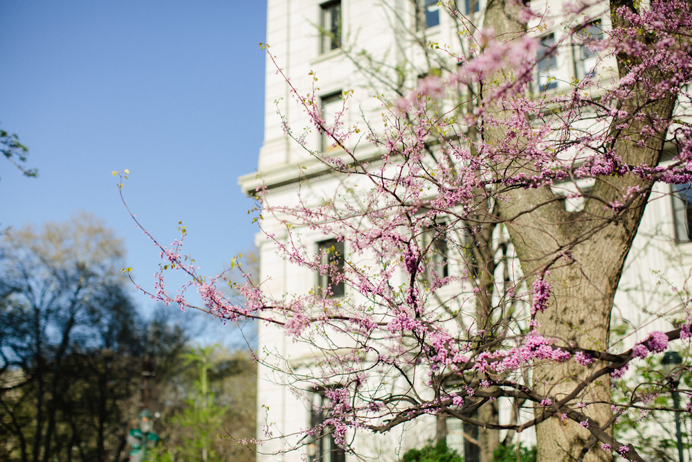 Philadelphia Wedding Photographers Cherry Blossom Session_JDP-81.jpg