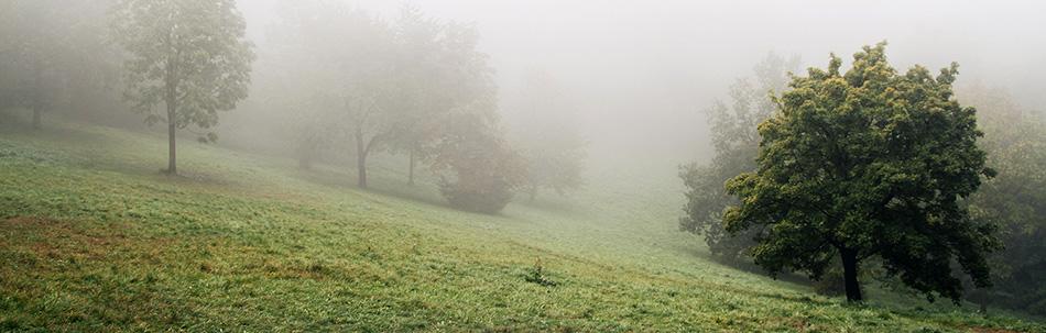 cover fog.jpg