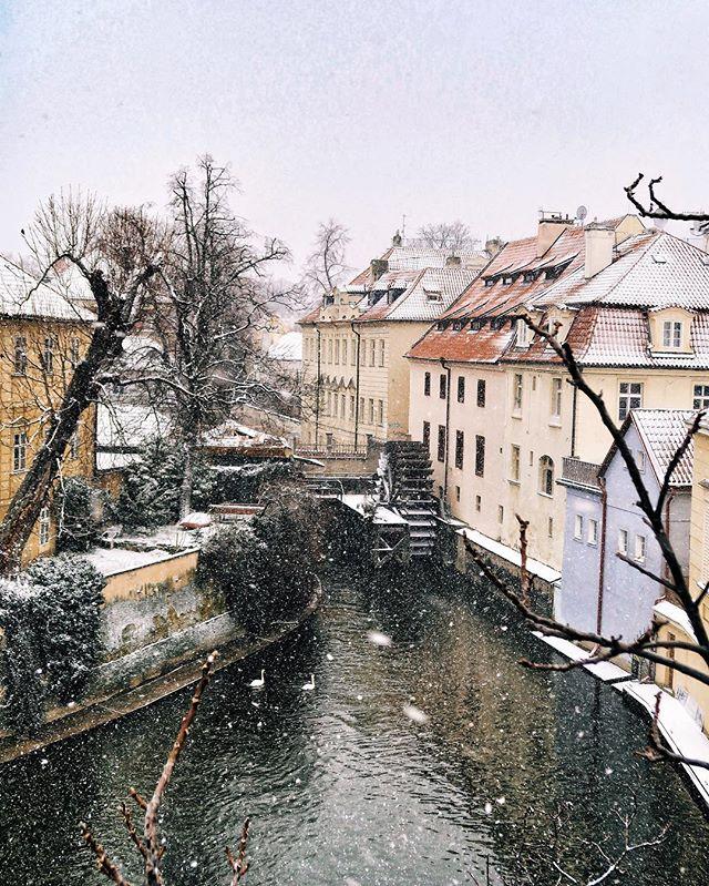 Labutí romantika💑 - Swan romance💑 - #prague #praguestagram #praguestagirl #praguegirl #prag #praga #praha #czech #czechrepublic #czechgirl #czechboy #iglifecz #igerscz #igraczech #view #snow #architecture #architecturelovers #beautiful #beautifuldestinations #snowy #streetphotography #vsco #vscocam #travel #travelgram #travelstagram #instatravel #pragueworld