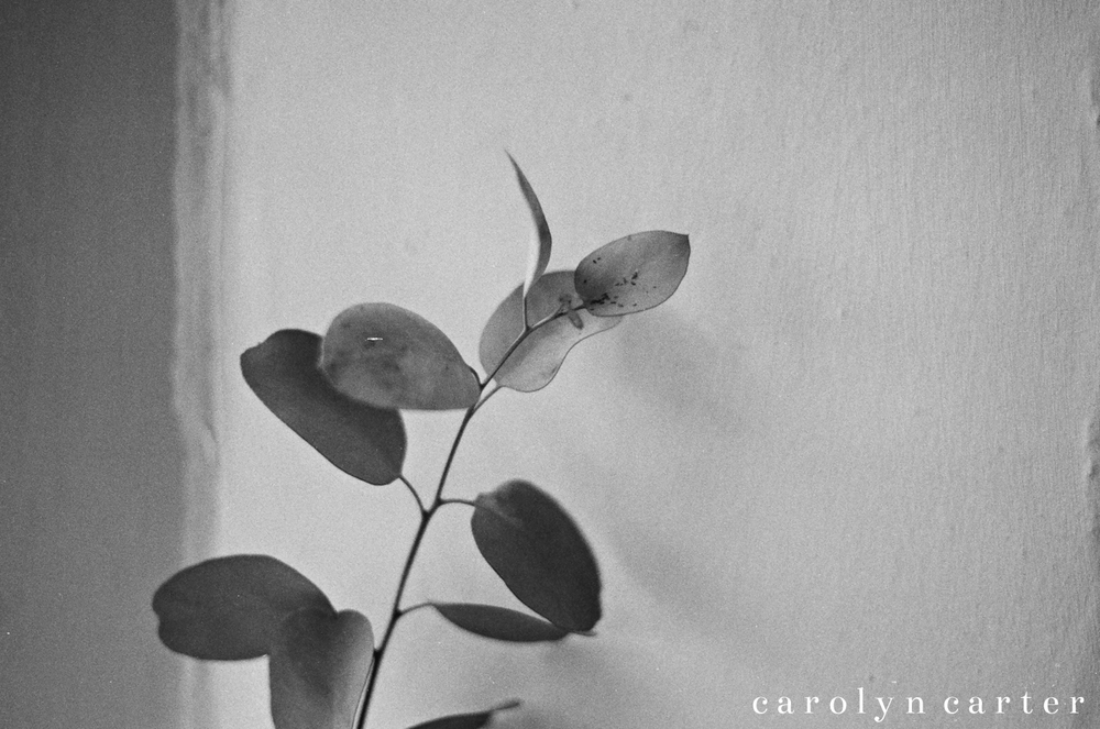 Eucalyptus leaf | Black & white photograph