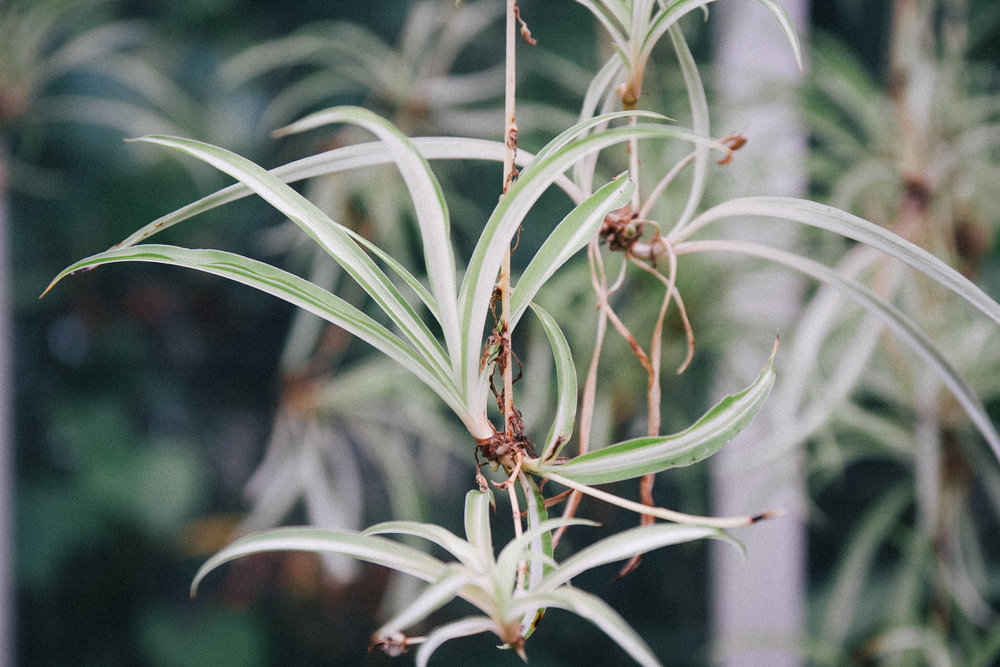 Air plants - Birmingham Botanical Gardens | carolyn carter blog
