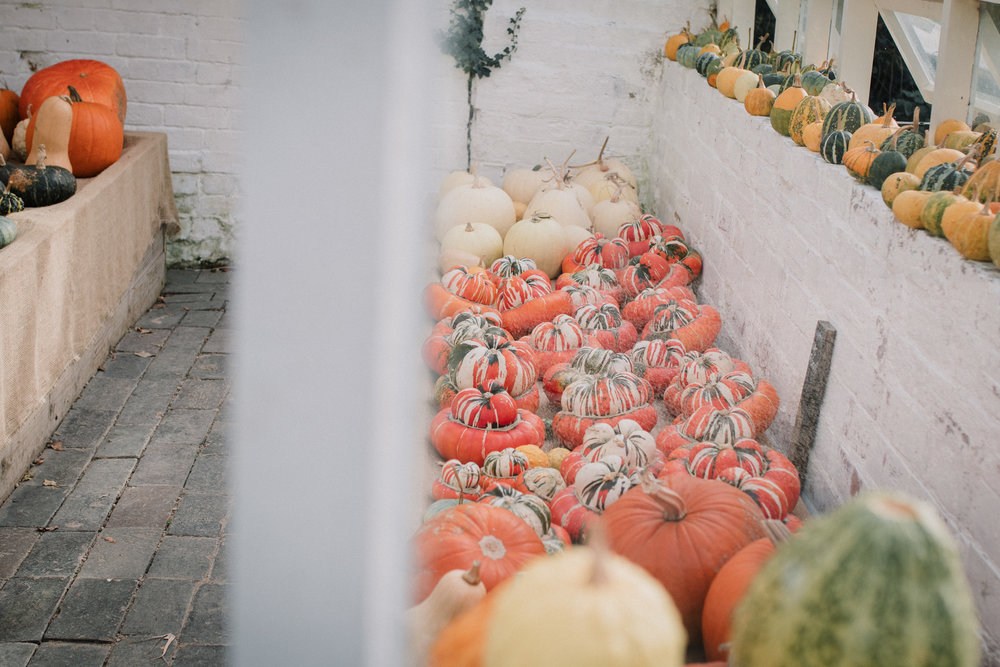 A visual ode to Autumn - Carolyn Carter photography