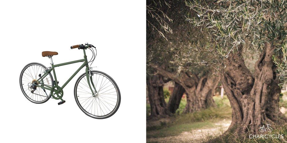 Olive gallery.jpg
