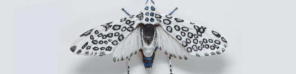 Moth4_web70_1200px.jpg