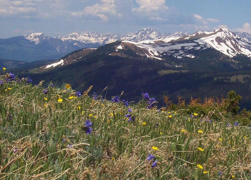 Alpine Tundra - Copper Mountain, Colorado ( John Holm  | Wikipedia)