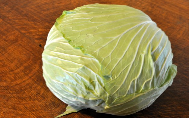 A German heirloom, Brunswick cabbage dates from the 18th century. It's classified as a drumhead cabbage because of its wide, flat shape. Dense and sweet, it's an excellent sauerkraut cabbage, but any type of cabbage will do.