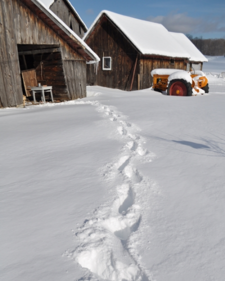 Winter barns at Bluestem Farm.