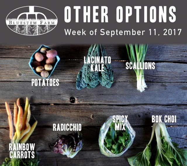 Other Options - Week 14