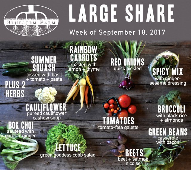 Large Share - Week 15