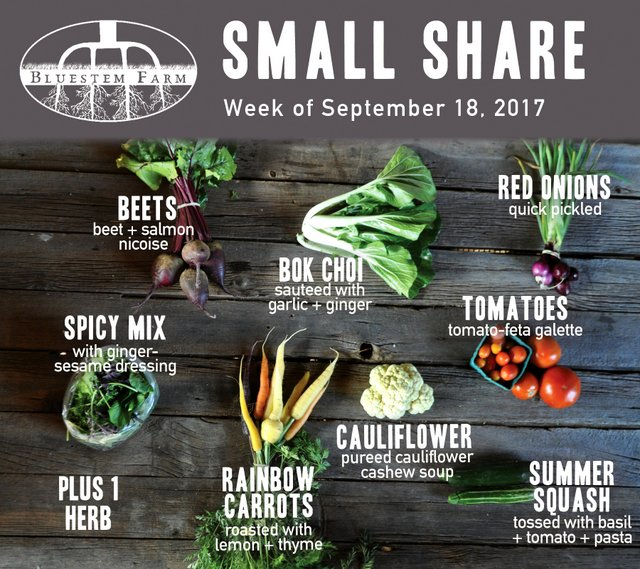 Small Share - Week 15