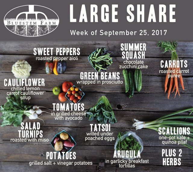 Summer Share - Week 16 - Large