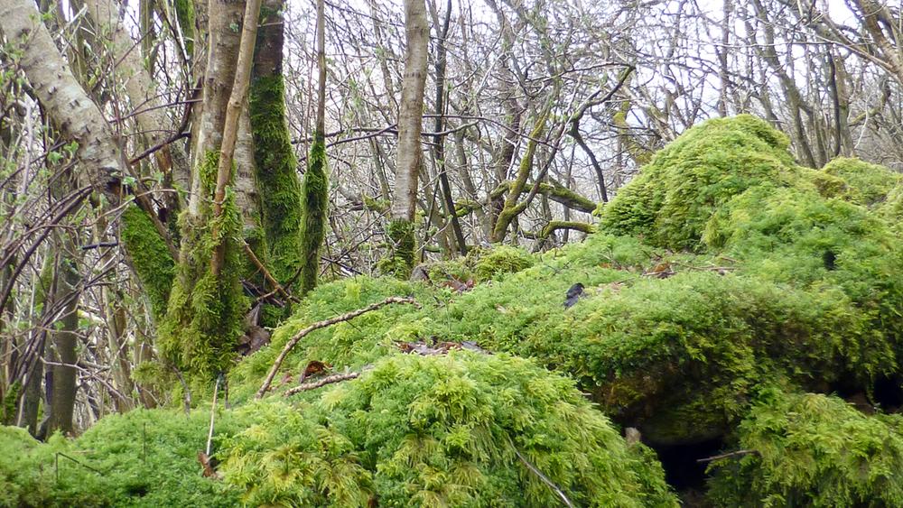 Fosse Wood