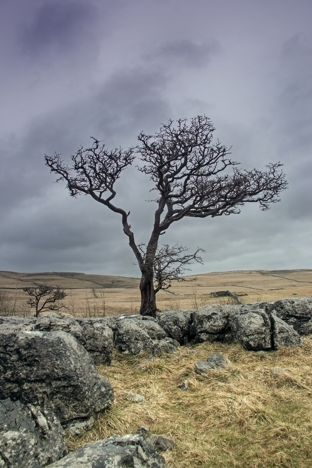 lone tree on lime stone pavement
