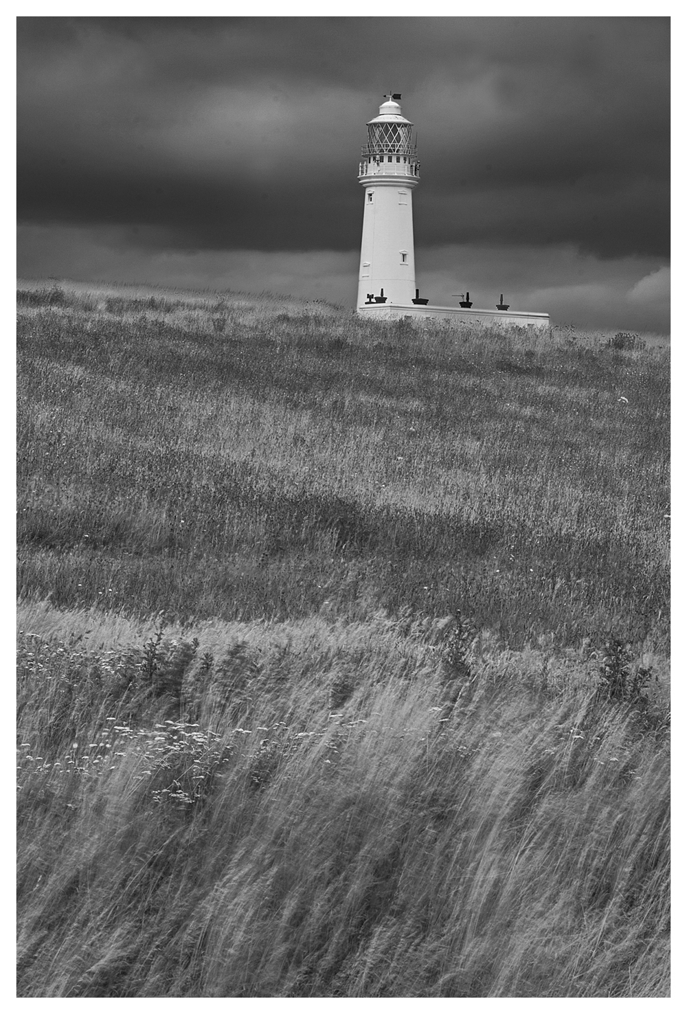 grasses at Flamborough lighthouse