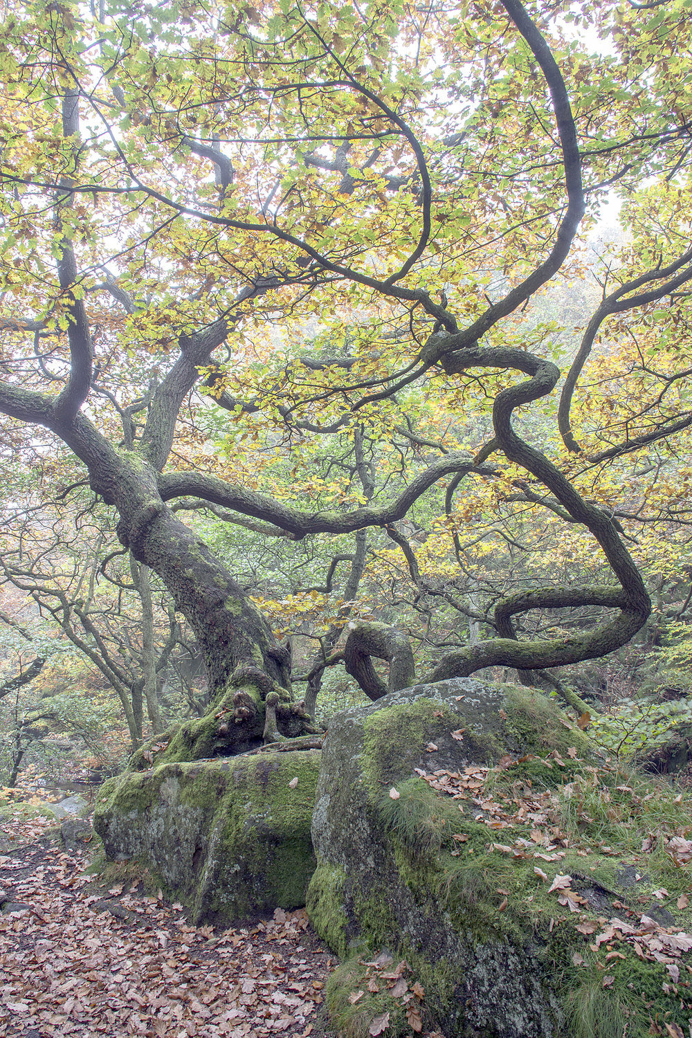 Twisted - Padley Gorge