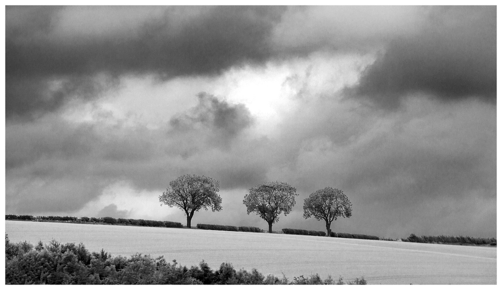 Three trees above Horse Dale